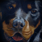 Pet Commissions by Suzanne Shelden