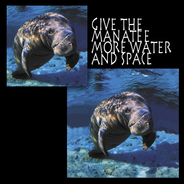 Manatee -- Give more water and space
